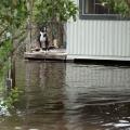 04SAR_NEW_091117_After_Hurricane_Irma_02_print