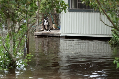 A dog barks as floodwater reaches the porch of a home near Jack Wright Island and State Road 13 on Monday, September 11, 2017, in the afternoon following Hurricane Irma. Some residents in the neighborhood have chosen to stay in their homes despite severe flooding blanketing several streets and entering houses. (Christina Kelso/ The St. Augustine Record)