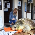 9_SAR_NEW_022417_Turtle_01_lede