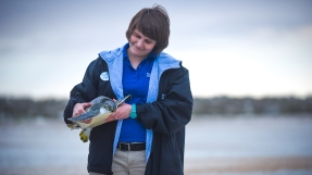 National Aquarium Animal Rescue team member Lindsay Jacks, prepares to release one of 19 rehabilitated sea turtles who washed up with symptoms of cold stunning in New England, at Anastasia State Park on Thursday, January 27, 2017. (Christina Kelso/ The St. Augustine Record)