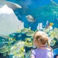 SAR_NEW_052717_Aquarium_01_lede