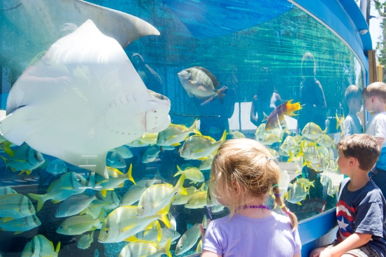 Four-year-old Olivia McDonald, six-year-old Couper Holmes, and three-year-old Noah Jackson, peer through the glass of an outdoor tank at the St. Augustine Aquarium as colorful fish are fed by a staff member during the aquarium's grand opening celebration on Saturday, May 27, 2017. (Christina Kelso/ The St. Augustine Record)
