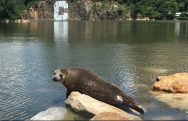 seal_contributed